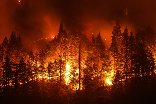 How to Seek Financial Recovery for Damages & Losses Caused by the Camp Fire